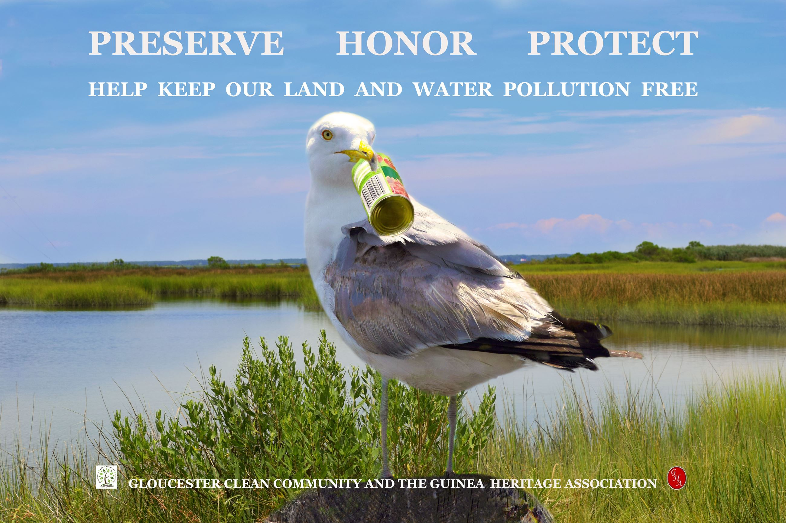 crying seagull in front of a beautiful marsh. Seagull is holding a piece of trash in its bill.